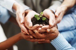 four hands holding a seedling